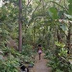 walk through the jungle