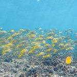 Foto van Shark Bay