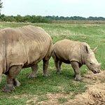 Rhino & Baby
