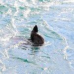 Фотография Wildlife Coast Cruises