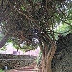 Antonio Borges Garden, Ponta Delgada, Sao Miguel, Azores