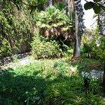 Фотография Jardin Aquatico