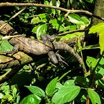 Photo of Iguana Tours