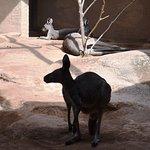 Kangeroos looked skinny