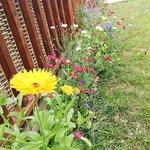 Garden Wildflowers