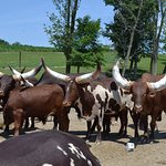 Bild från The Farm at Walnut Creek