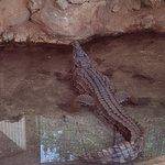 Foto de Ocean Aquarium