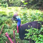 Foto de Shanghai Zoo (Shanghai Dongwu Yuan)