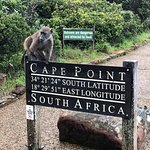 Baboons in Cape Point.