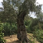 Fotografie: Il Giardino della Kolymbetra