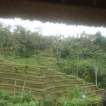 Photo of Carik Terrace Warung