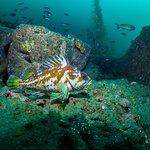 Blooming underwater colors