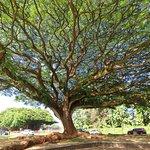 Unique Tree Like Umbrella