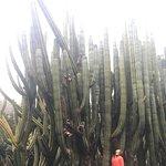 Foto di Jardin Botanico Viera & Clavijo