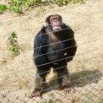 Photo de Jane Goodall Chimpanzee Eden Sanctuary