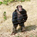 Jane Goodall Chimpanzee Eden Sanctuary Image