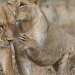 Photo of Pollman's Tours & Safaris