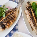 Marin Balık resmi