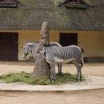 Фотография Франкфуртский зоопарк