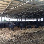Foto di Ristorante dell'Azienda Agricola Magazzé