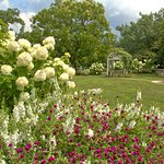 """The """"pink and white"""" garden outside the Phipps"""