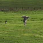 Foto de Lakeland Bird of Prey Centre