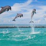 Фотография Остров дельфинов