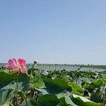 صورة فوتوغرافية لـ Lotus Valley