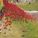 Poppies display from earlier in the year