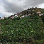 Yellow Bus Tours Funchal resmi