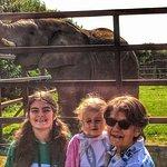 Howletts Wild Animal Park照片