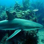 Foto di Sunn Odyssey Divers