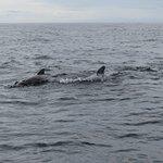 Couple Pilot Whales