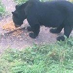 Bild från Vince Shute Wildlife Sanctuary