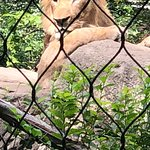 亨利维拉斯动物园照片