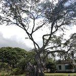 Foto van Moanalua Gardens Park