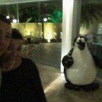 Photo de Pinguim
