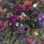 Ftowers f flowers everywhere
