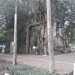 โบสถ์ของวัดถูกต้นไม้ขนาดใหญ่ 4 ชนิดปกคลุมอยู่ ได้แก่ ต้นโพธิ์, ต้นไทร,