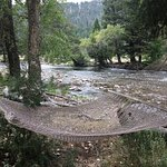 Hammock along the bank of Rock Creek- how perfect!