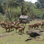 Ảnh về Gopalpur Zoo