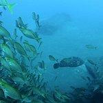 Foto de Explora Madeira Diving Center