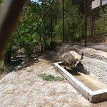 Gopalpur Zoo @Dhauladhar National Park