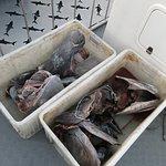 Valokuva: African Shark Eco-Charters