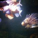 SeaQuarium Foto