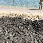 Zdjęcie Ultima Spiaggia delle Cesine
