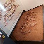 صورة فوتوغرافية لـ Nuovo Museo Archeologico di Ugento (Museo Civico)