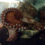 Discovery Passage Aquarium Foto