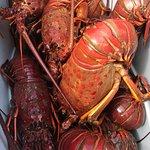 Foto de The Lobster Trap