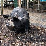 Photo of Battersea Park Children's Zoo